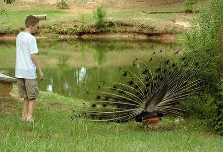 Karl peacock