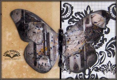 02 Butterfly Closeup