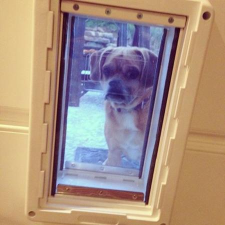 2013_17_dogdoor