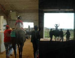 Horses_blog_1